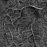 Alien Veins Grayscale