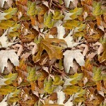 Fall Leaves Camo