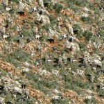 Mountain Goat Camo